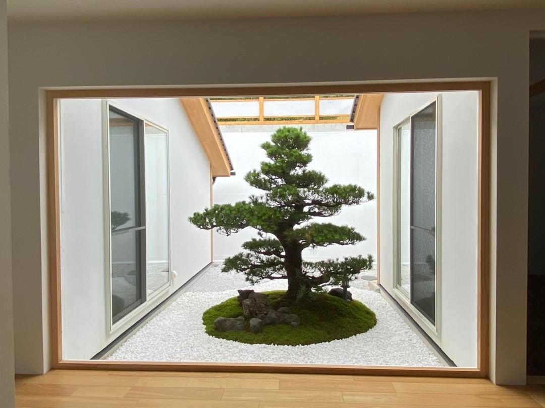 京都市右京区 R邸玄関松・作庭工事のサムネイル